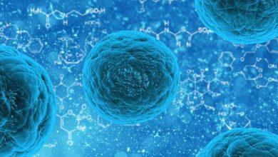 Photo of La flora batterica intestinale: cos'è e come tenerla in salute