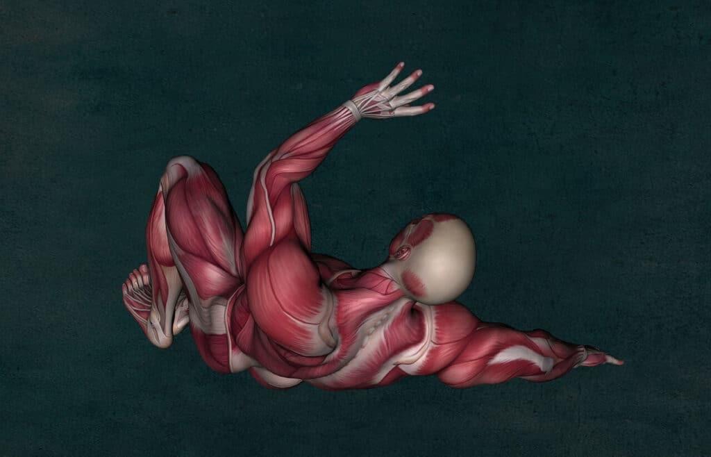 massa muscolare