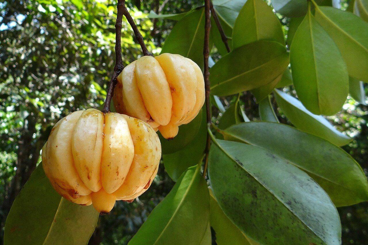 Garcinia Cambogia per dimagrire